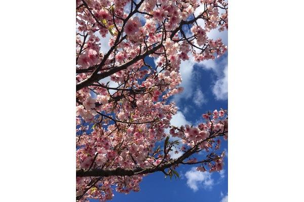 ひと足先に春が来た!~...